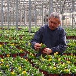 Concord Nurseries Master Grower George Chapman